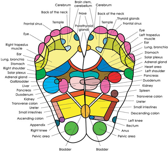 Acupressure (Reflexology) Charts Collection  |Acupressure Points Chart Toes