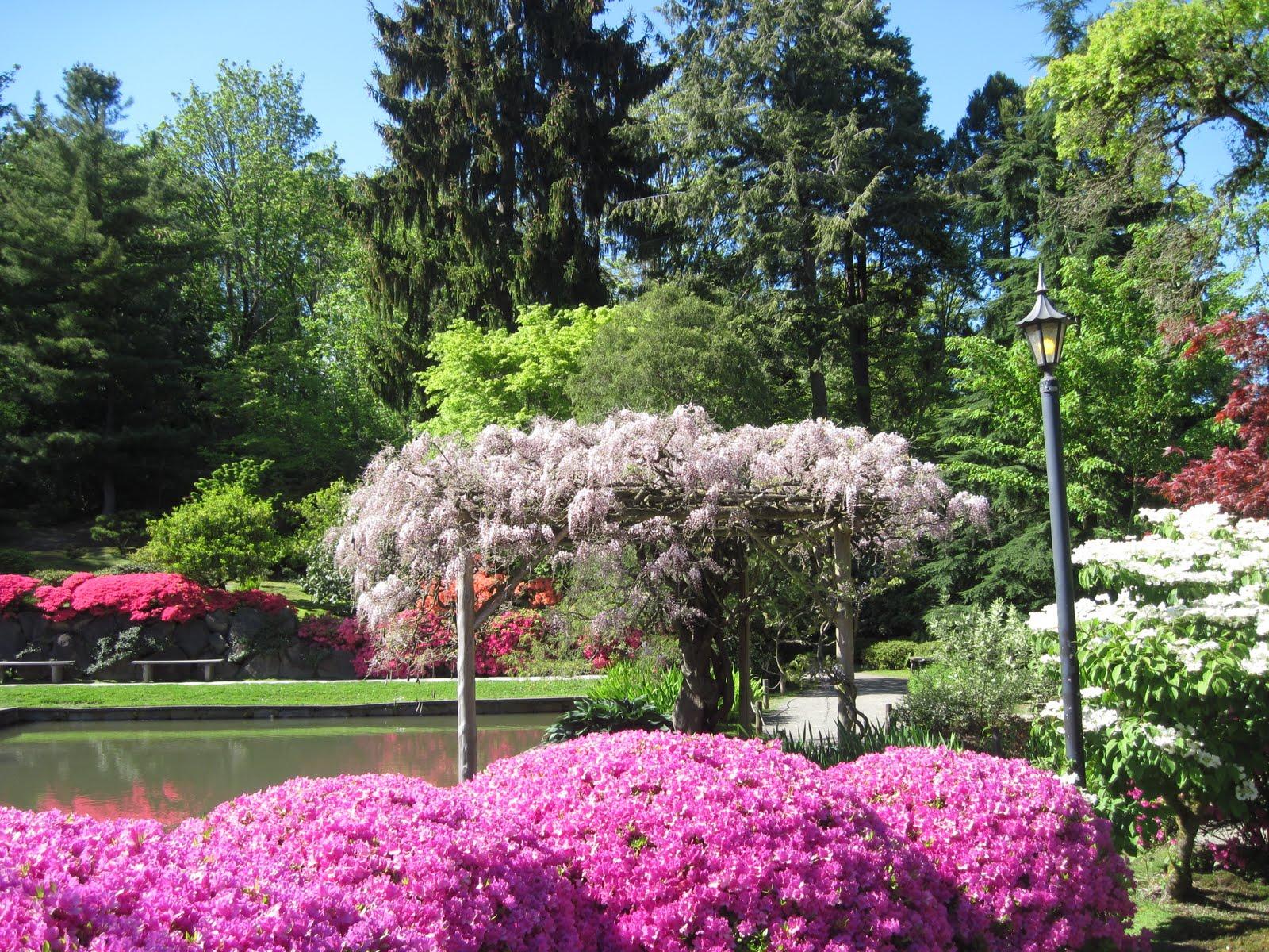 Japan Garden Flowers: The Schramm Journey: Seattle Japanese Garden