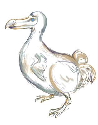 draw dodo bird