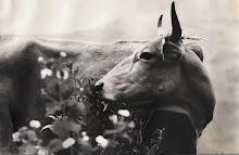 ...la vache...