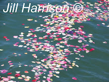 Petals on the Water