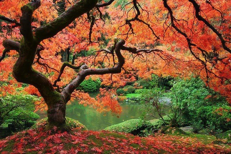 BONSAI PARK tree shrub plant the most beautiful Japanese ... |Beautiful Japanese Trees