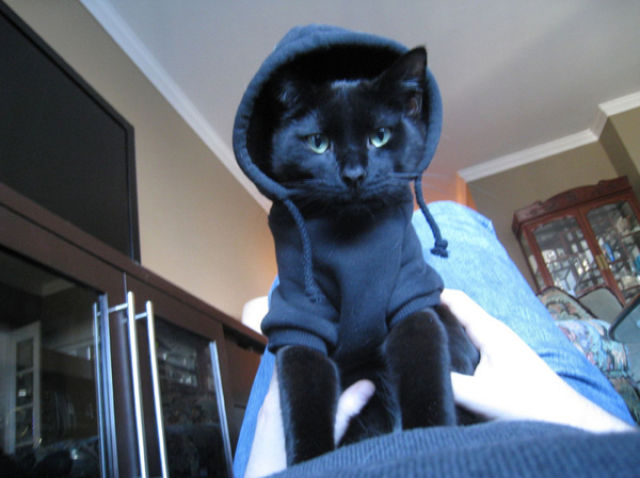 Cool Animals Pictures Cute Kittens In Hoodies