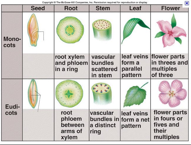 Frick's Fantabulous Science Site: Monocts vs Dicots 10 Examples Of Monocot Plants