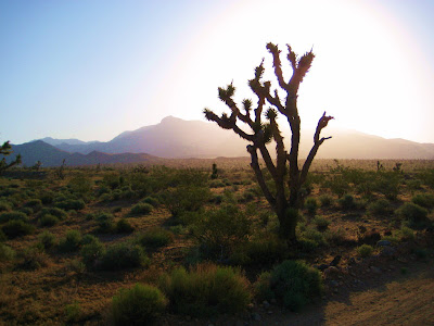 Photo of Joshua Trees by Roland Lee