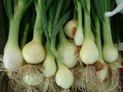 http://1.bp.blogspot.com/_X-A4ET-jAdw/S7OHOwpErVI/AAAAAAAAMAg/EaxBn0CtfP0/s400/spring_onionR.jpg