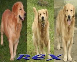 My Boy Rex