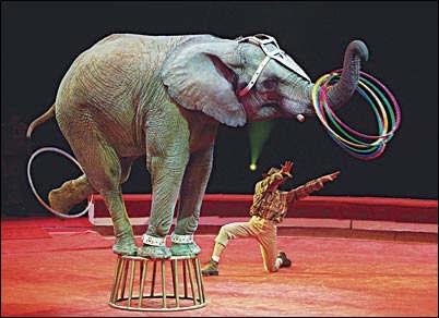 [elefante]