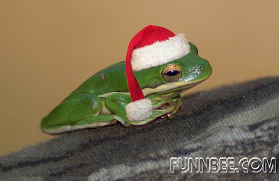 http://bp0.blogger.com/_X2sjPjJJdH8/R3FF4nwL3ZI/AAAAAAAAB8A/Q7mbZBPzHkI/s400/christmaspet12.jpg