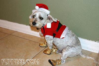 http://bp0.blogger.com/_X2sjPjJJdH8/R3FF4nwL3bI/AAAAAAAAB8Q/JjYSPPo91N0/s400/christmaspet14.jpg