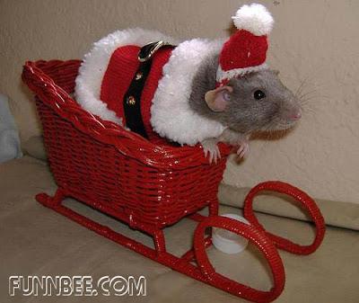 http://bp3.blogger.com/_X2sjPjJJdH8/R3FGvXwL31I/AAAAAAAAB_Q/N_pA60-vQd8/s400/christmaspet6.jpg
