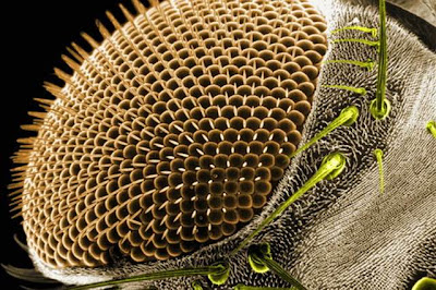 Insects-microscope-13.jpg