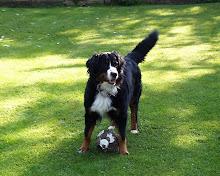 änglahunden Wilma