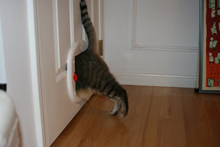 You'll notice how only one cat went through the door yet two are ...
