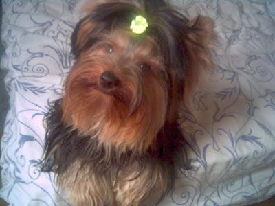Romeo Um Cão Valente