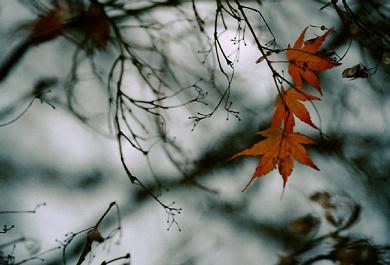 Ruas de Outono