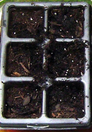 Dano S Garden Bell Pepper Seed Germination Blues