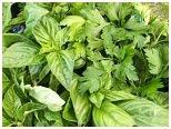 Adaptogenic herbs image