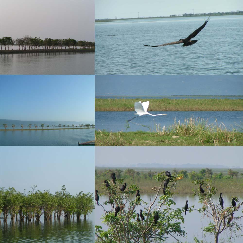 Bangladesh Hero Alom: TANGUA Bangladesh Nature Wallpaper