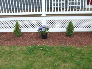 picture of planting hydrangeas