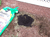 picture of hole for hydrangea plant