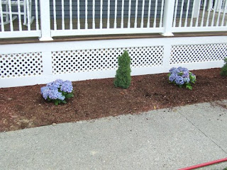 picture of hydrangeas