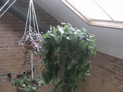 stainless steel hanging planter