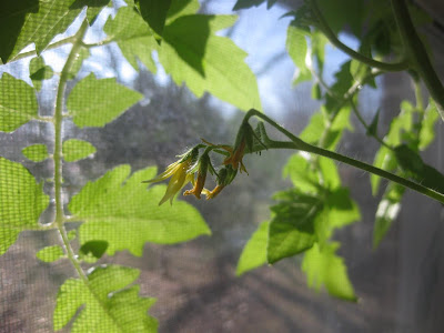 how to make a hanging tomato plant, simple, craft project, diy