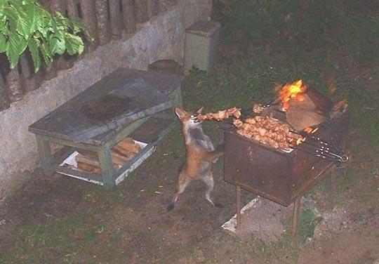 [fox.jpg]