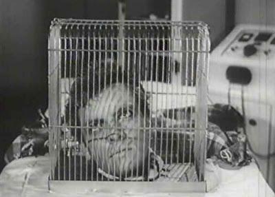 Image result for I was a teenage frankenstein birdcage