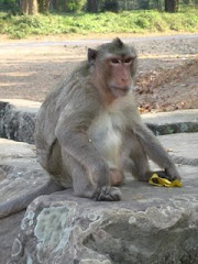 The Monkey Inside Angkor Wat
