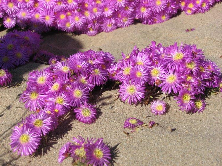 [beach_flowers.jpg]
