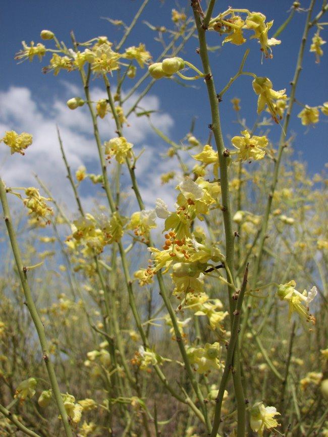 [yellow_flowers_day1.jpg]