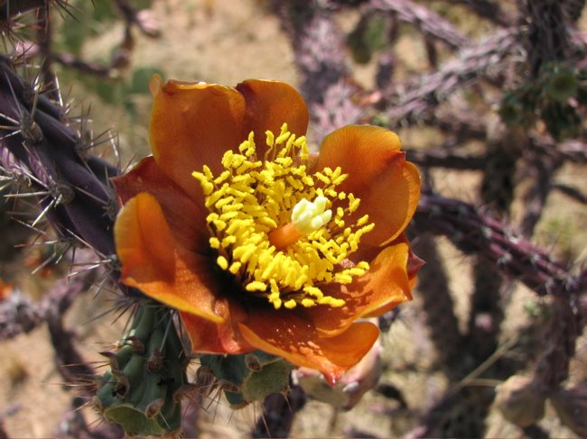[cactus_flower_red1.jpg]