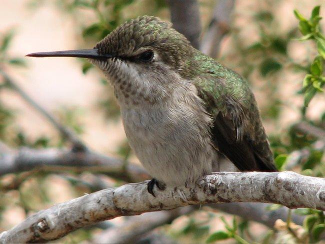 [humming_bird2.jpg]