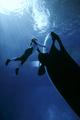 [orlando_seaworld_orca.jpg]