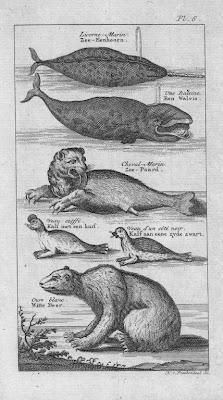 Animaux de la Baie d'Hudson (gravure ancienne)