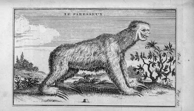 Paresseux faune d'Amérique du sud gravure ancienne
