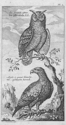 Dessin gravure grand duc et aigle queue blanc - Dessin hibou grand duc ...
