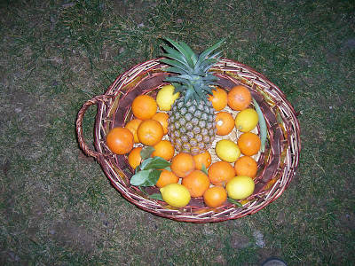 Corbeille de fruits : ananas, oranges, citrons