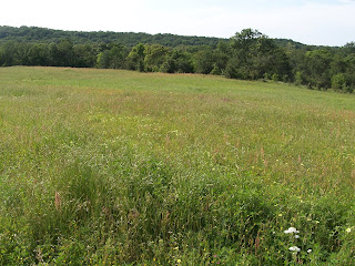 A Homestead Journey, a retrospective on 14 years - hayfield of native grasses and wildflowers