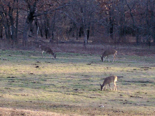 A Homestead Journey, a retrospective on 14 years - deer in the pasture