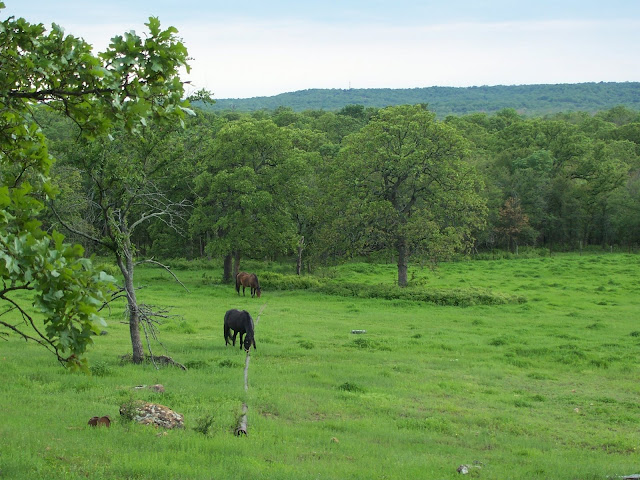 A Homestead Journey, a retrospective on 14 years - peaceful green pastures