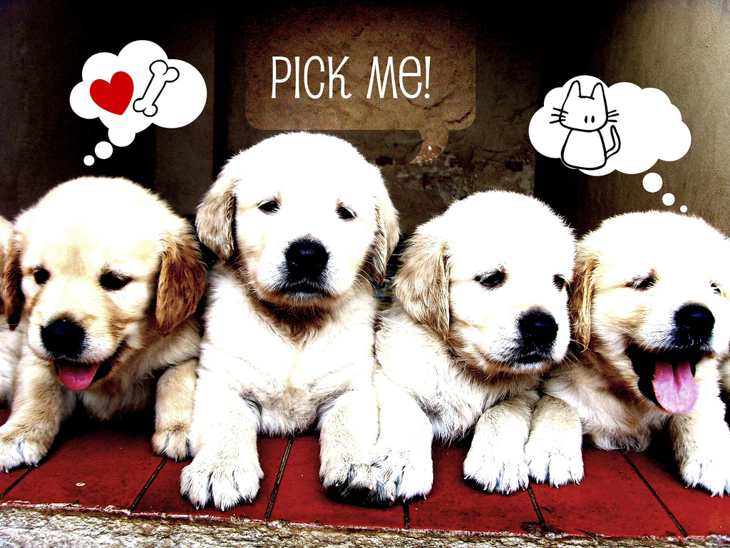 Wallpaper Lucu Anjing Yang Imut