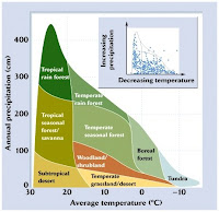 nitrogen cycle essay