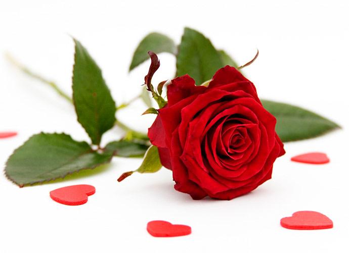 """Single Rose Clipart: Jenny Of ELEFANTZ: Block 7 """"Promises & Borders"""" BOM"""