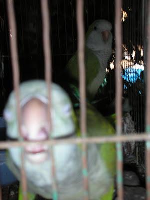 Aggressive birds