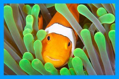 Clownfish - программа-переводчик для Skype