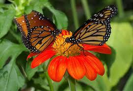 Save Biodiversity Save The World Do Butterflies Sleep