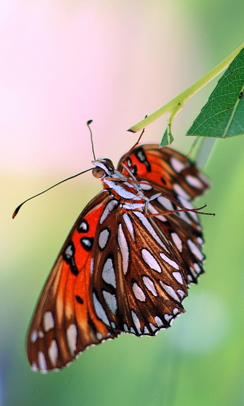 Mobile Wallpapers: Insects Mobile Wallpapers Download Free